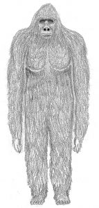 field guide drawing sasquatch front (gy)