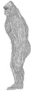 field guide drawing sasquatch side (gy)